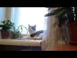 Кошка поёт.(Муся подпевает мне под скрипку)